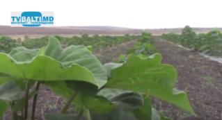 Семинар по выращиванию павлонии