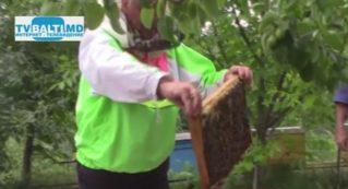 Содержание пчел и ценность продуктов пчеловодства