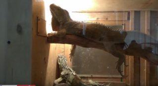 «Зоопарк» в Бельцах: дети рады, взрослые в шоке