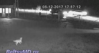 Видео с камер наблюдения — сотрудник Национального  инспектората патрулирования «Норд «сбил насмерть человека