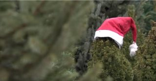 В Москве предлагают живые ёлки на прокат