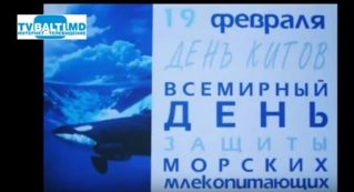 19 февраля-День кита и другие праздники.Праздник каждый день.