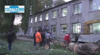 Снос аварийного дерева по бульвару Еминеску