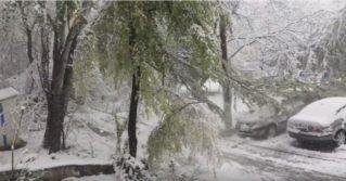 Кишиневец заснял падение дерева на автомобиль