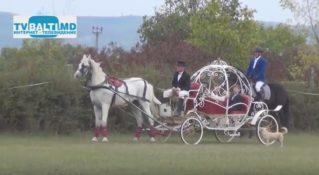 Шоу конного искусства Молдовы