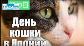 22 февраля- День кошки и другие праздники.Праздник каждый день.